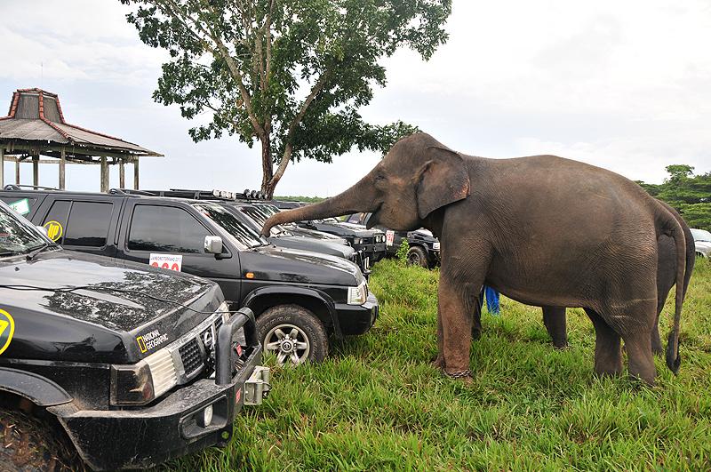 gajah-dan-tci360